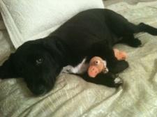 Sweet Sweet Pup