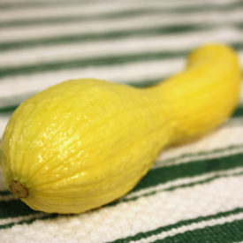 First Squash from our Garden