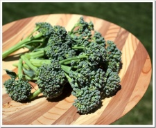 From Backyard Garden to Plate – Broccoli