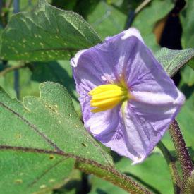 Garden update – good and not so good