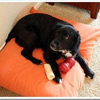 How to Make a Dog Bed – Step-by-Step With Photos