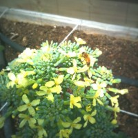 Little Green Friends – and How NOT to Grow Broccoli and Cauliflower