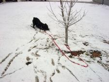 Snow in Meridian, MS