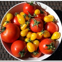 Vegetable Gardening – Grow and Tell