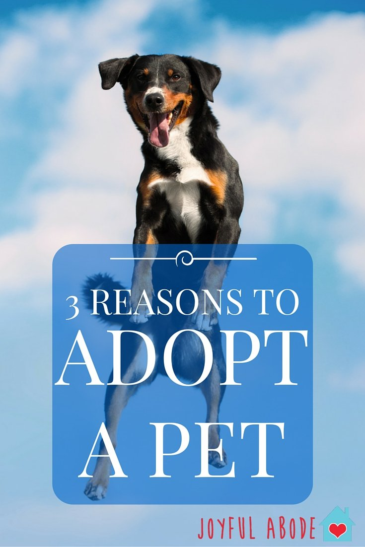 3 reasons to adopt a pet