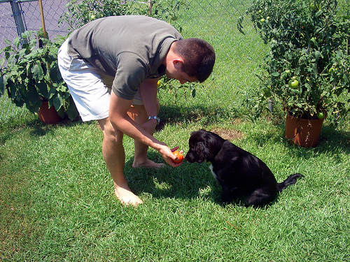 zora inspecting a tomato