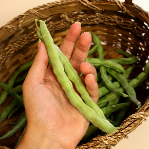 home grown green beans - too big