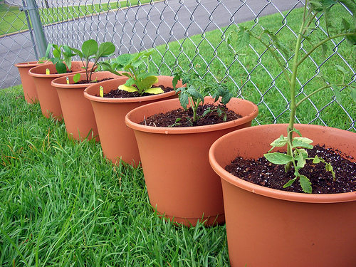 Container Vegetable Garden - Containers