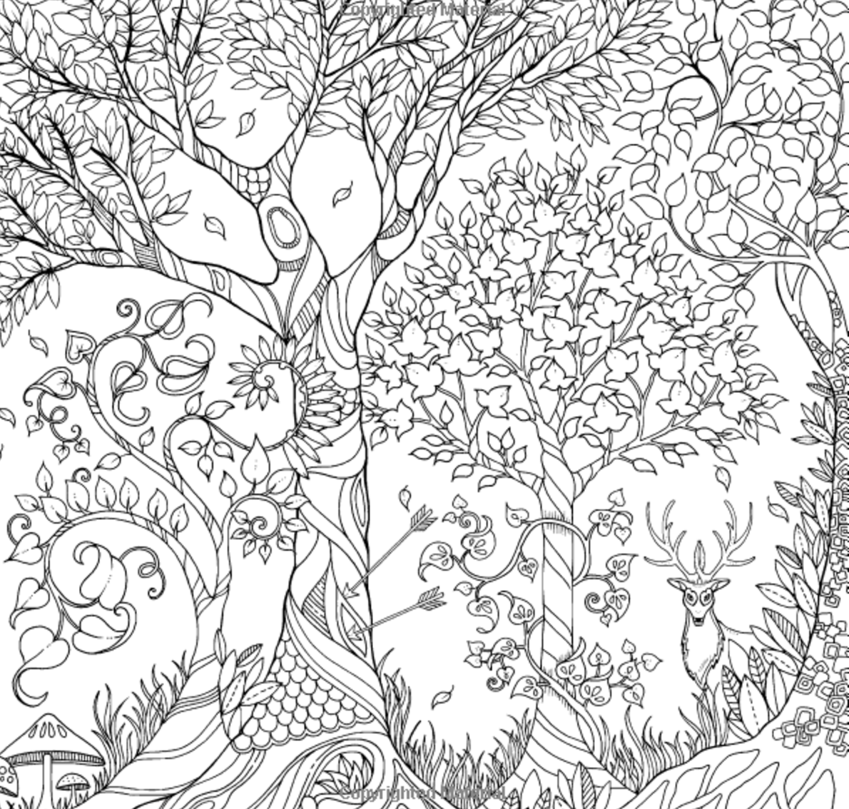 Enchanted Forest Coloring Book On Interview Johanna Basford