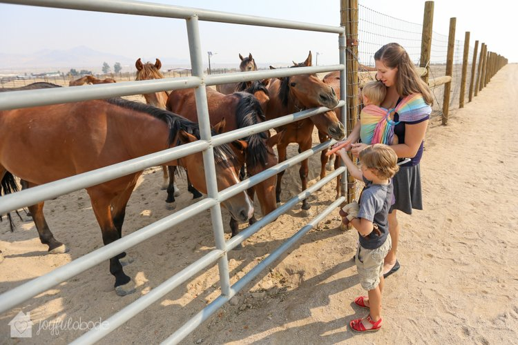 visit to wild horse and burro sanctuary ridgecrest ca-2