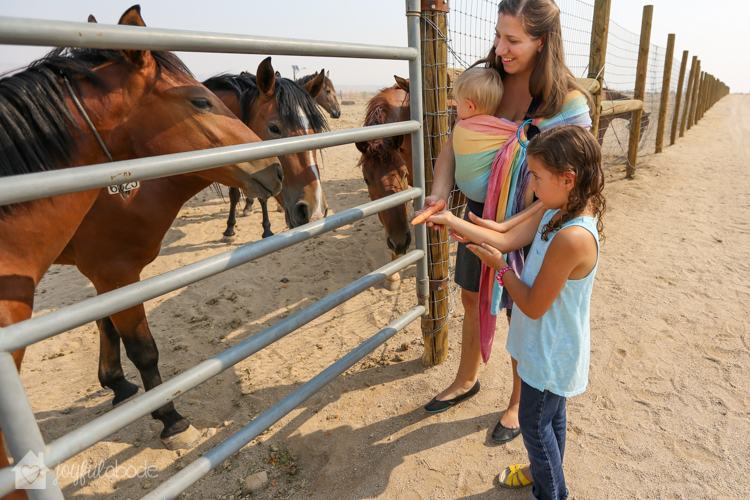 visit to wild horse and burro sanctuary ridgecrest ca-3