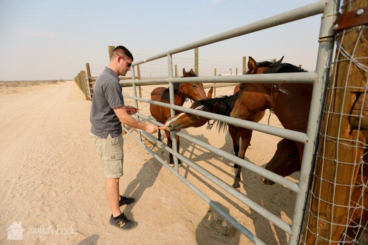 visit to wild horse and burro sanctuary ridgecrest ca-4