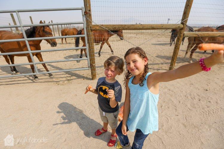 visit to wild horse and burro sanctuary ridgecrest ca-5