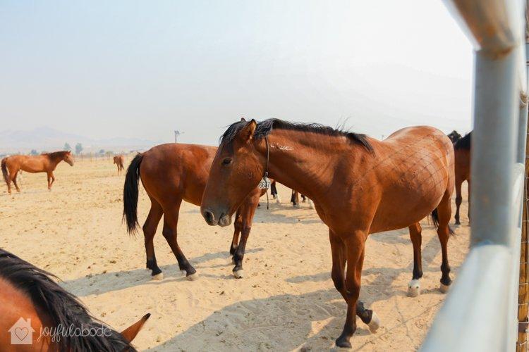 visit to wild horse and burro sanctuary ridgecrest ca-6
