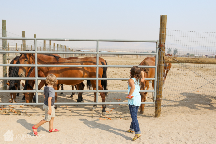 visit to wild horse and burro sanctuary ridgecrest ca-7