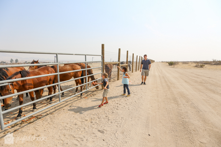 visit to wild horse and burro sanctuary ridgecrest ca-8