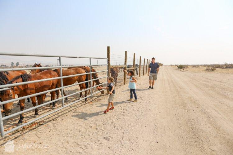 visit to wild horse and burro sanctuary ridgecrest ca-8