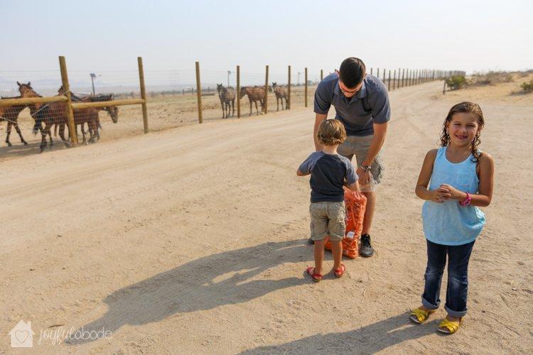 visit to wild horse and burro sanctuary ridgecrest ca