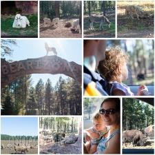Bearizona – Williams, AZ Things to Do With Kids